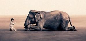 enfant_elephant